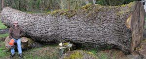hardwood logs 1