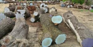 Cut Hardwood Logs