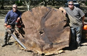 walnut salvage huge log-3