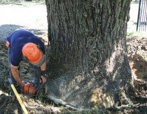walnut salvage yard-2