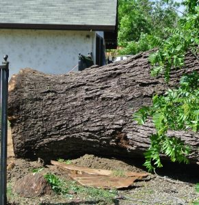 walnut salvage yard-4
