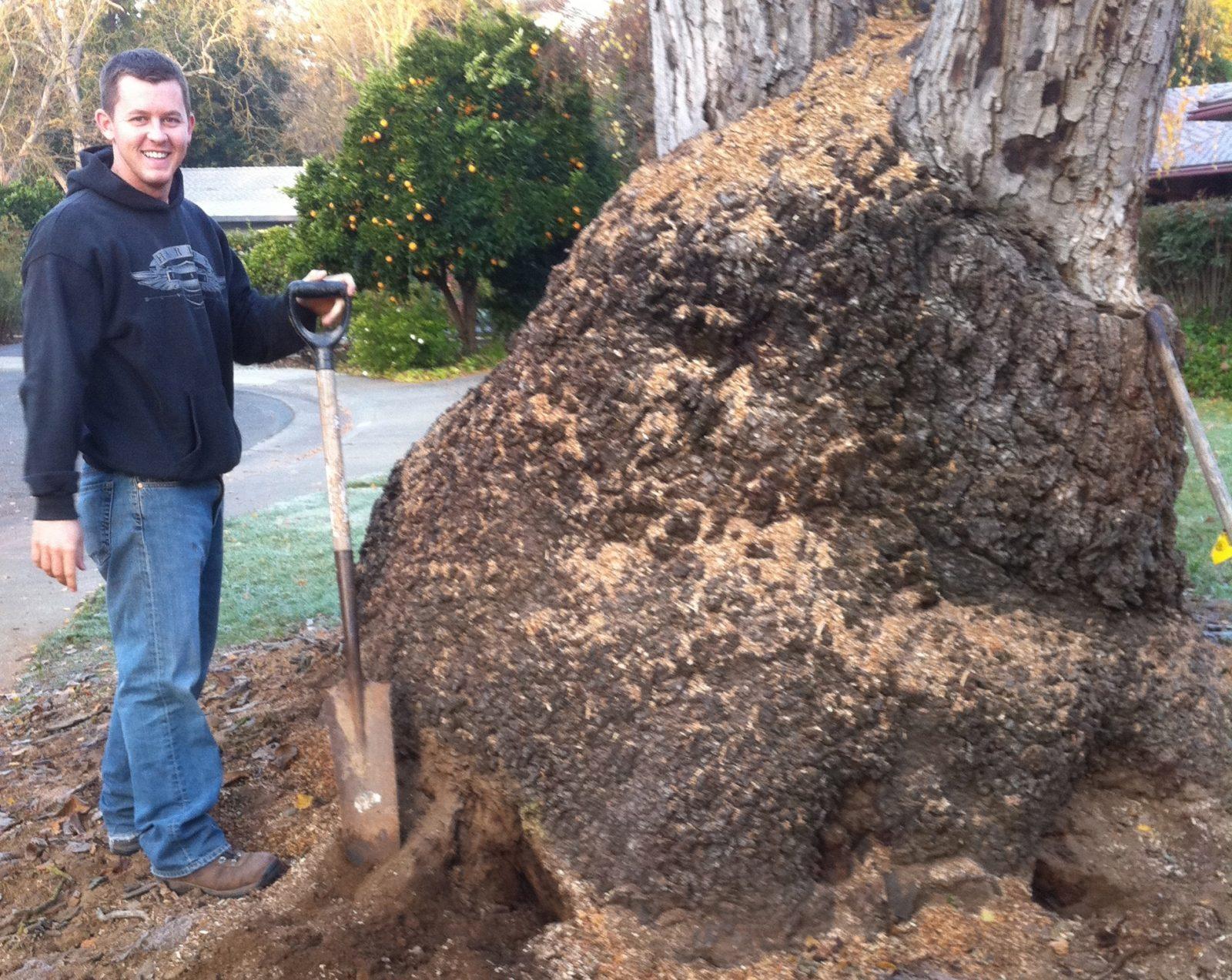 Where Do Walnut Burl Slabs Billets Blocks And Veneer