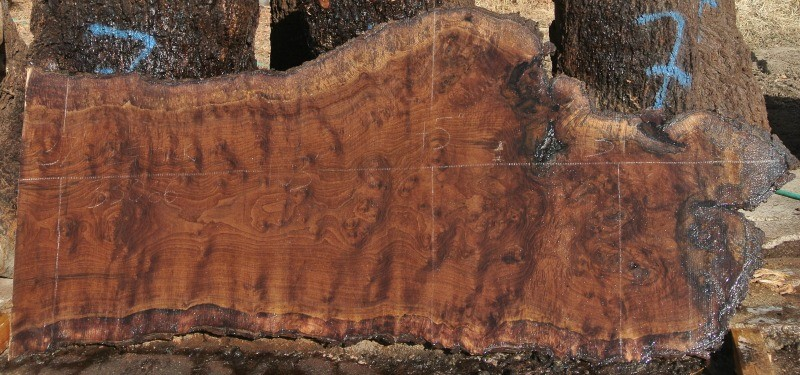 We Just Listed Large Grafted Black And English Walnut