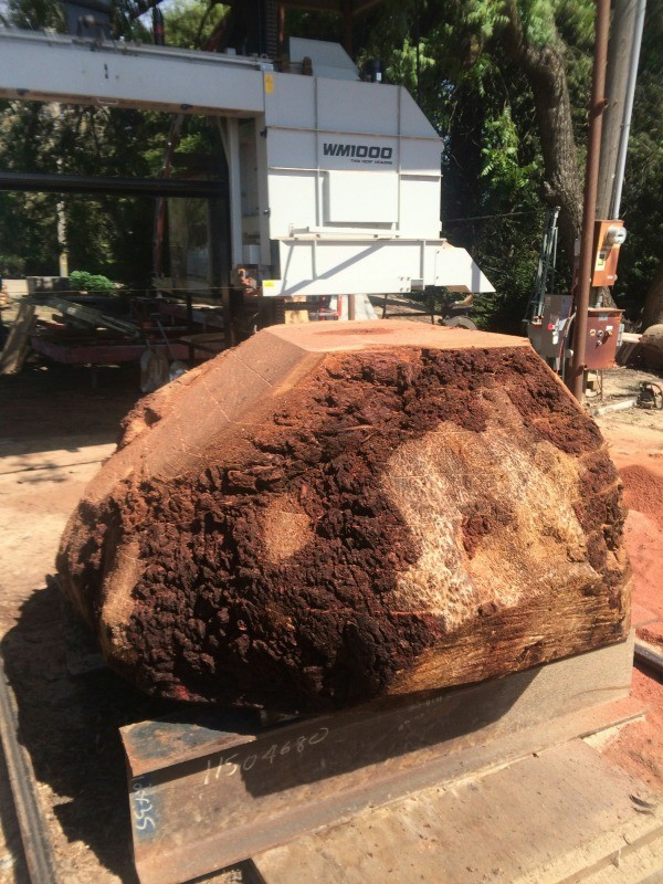 Redwood Burl For Sale