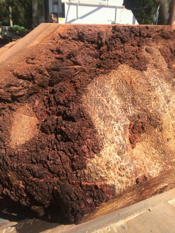 Lace Redwood Burl Live Edge Slabs Salvaging And