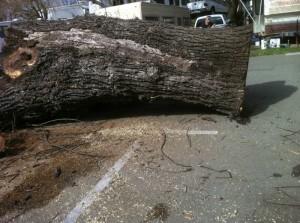 trailerwalnuttree-2