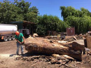 Salvaged Hardwood Logs
