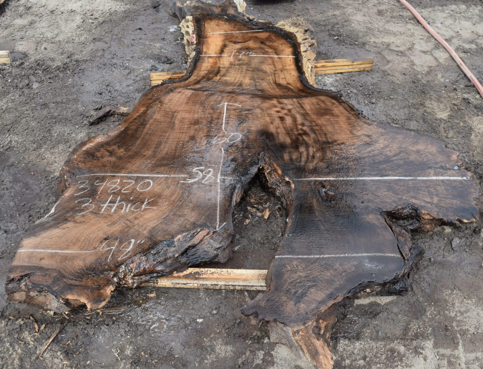 34820 Claro Walnut Burl Slab 60