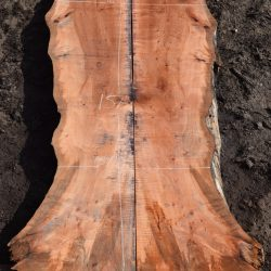 Red Willow Slabs