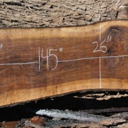 Walnut Hardwood Slabs 10ft-14ft Long