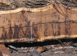 Walnut Hardwood Slabs 14ft-17ft long